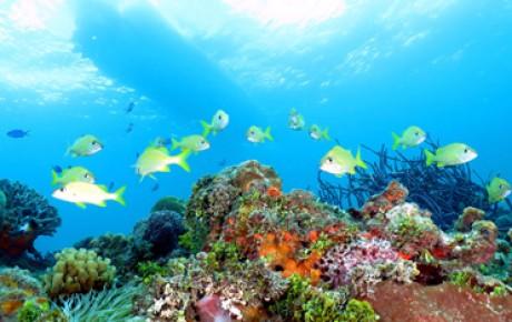 Cozumel Tours - Cozumel Snorkel Tour