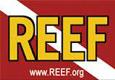 Logo-REEF-