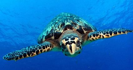 Cozumel snorkeling tours